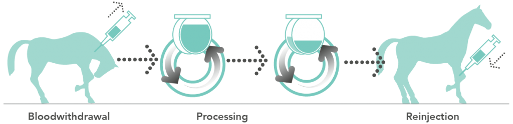 Osteokine PRP processing